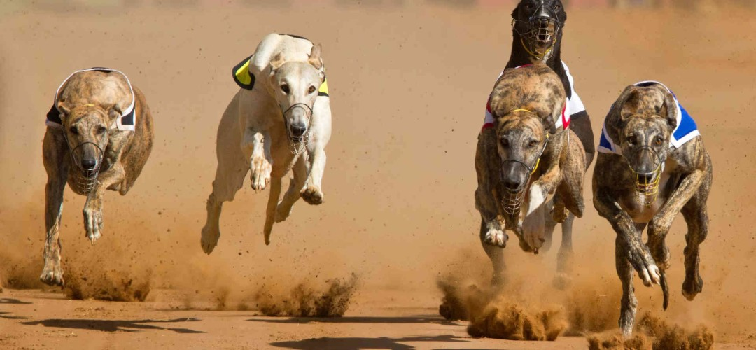 Race Day Package Brighton Night at The Dogs Greyhound Racing (Six Pack Deal)